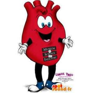 Maskot i form av ett organ, ett rött hjärta. Hjärtadräkt -