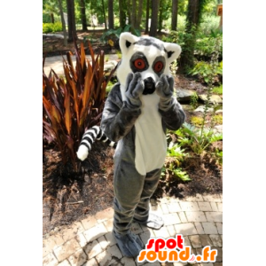 Mascota del lemur, pequeño mono gris y blanco