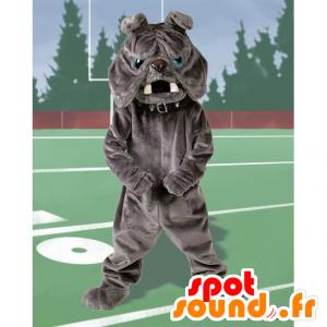 Graue Bulldoggen-Maskottchen, blaue Augen - MASFR21712 - Hund-Maskottchen