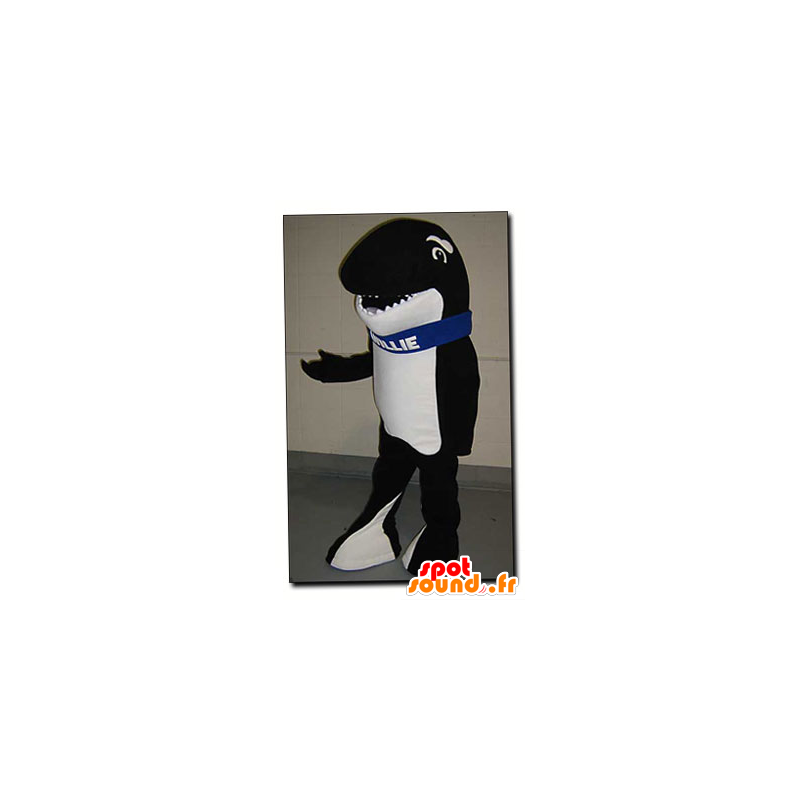 Black and white orca mascot - Mascot Willie - MASFR22123 - Mascots of the ocean