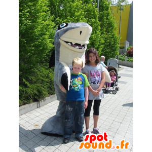Maskotka szary i biały rekin, gigantyczny i bardzo udany