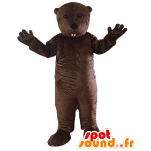 Mascot murmeli, ruskea majava, jyrsijä - MASFR22667 - Mascottes de castor