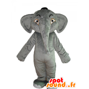 Mascot elephant gray, smooth and impressive