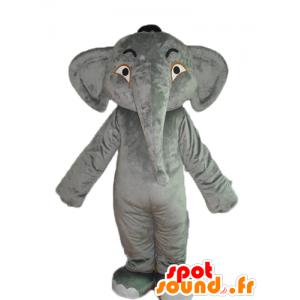 Mascotte elefante grigio, liscio e impressionante