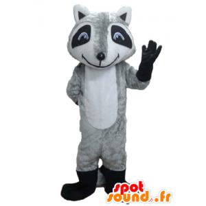 Mascota mapache Tricolor con ojos azules - MASFR23207 - Mascotas de cachorros