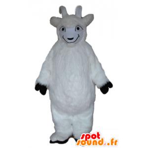 La mascota de cabra, cabra blanca, peluda todo