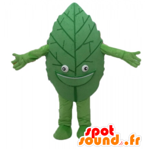 Green leaf mascot, giant and smiling