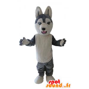 Husky-Maskottchen. Hund Maskottchen grau und weiß Wolf - MASFR028699 - Hund-Maskottchen