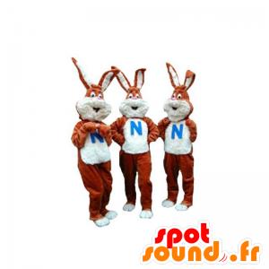 3 mascots of brown and white rabbits. Lot 3 mascots - MASFR031931 - Rabbit mascot