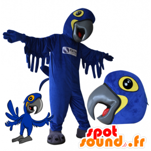 Azul de la mascota y el loro amarillo. mascota del pájaro