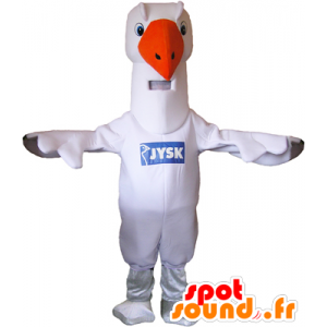 Mascot gull, gull, albatross