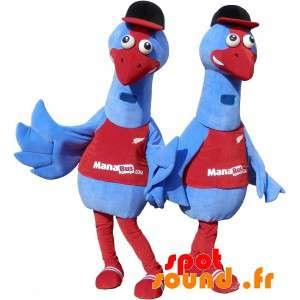2 bluebirds mascotes. traje...